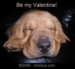 Rufus Chickus Magnetus - Be My Valentine! - Click to see more.